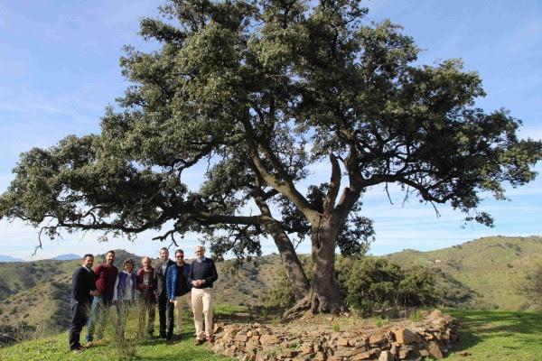 worten participa en la reforestacin de la reserva ecolgica hacienda de mellado