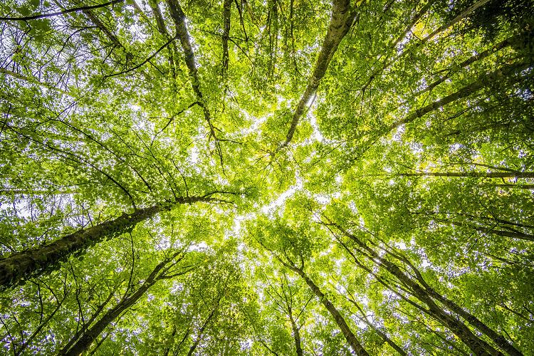 atos y hdf energy crearn un centro de datos con hidrgeno verde