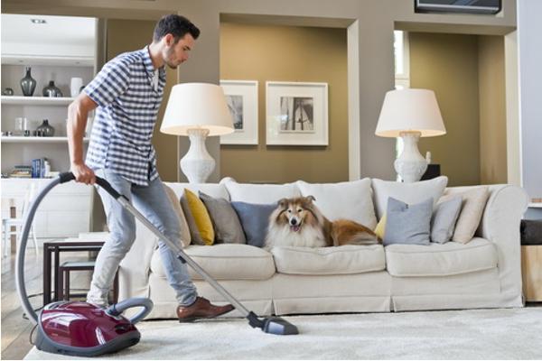 catampdog de miele la solucioacuten de limpieza para los amantes de las mascotas